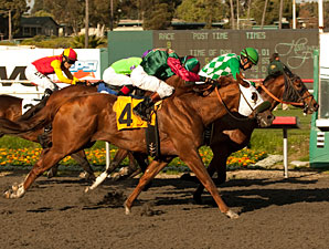 Nahem in the 2011 Snow Chief Stakes.