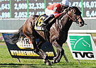 Naples Bay Tops Grade III My Charmer