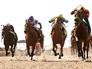 Native Treasure wins the 2012 I'm Smokin Stakes.