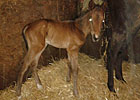Naughty New Yorker's First Foal Arrives