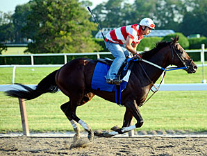 Derby Runner-Up Nehro Breezes at Belmont
