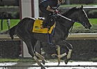 Nehro Carries Zayat&#39;s Hopes in Derby 137