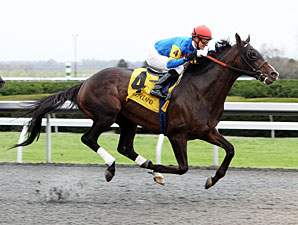 Newsdad wins the 2012 Fayette Stakes.