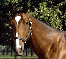 Barbaro's Full Brother Nicanor Developing Nicely