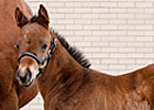 First Foal by Nobiz Like Shobiz Is a Filly