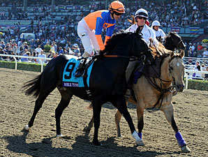 Noble Tune - Breeders' Cup 2012