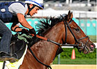 Normandy Invasion Returns to Training