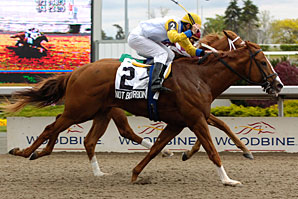 Not Bourbon Tops Queen's Plate Field