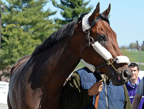 Nyquist Arrives at Keeneland