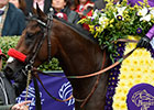 Darley Secures Breeding Rights to Nyquist