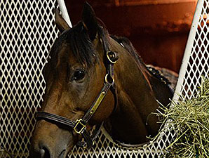 Nyquist in his Stall