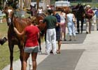 Open Portion of OBS Yearling Sale Sees Increases