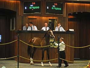 A.P. Indy Colt Brings $675,000 at OBS
