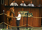 Numbers Soar at OBS Spring Juvenile Sale