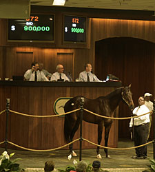 Brushwood Buys Bernardini Colt for $900,000