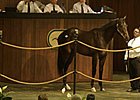Brushwood Buys Bernardini Colt for $900,000