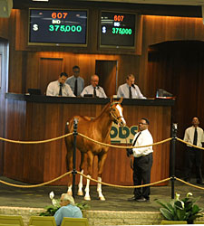 Record March Continues at OBS Spring Sale