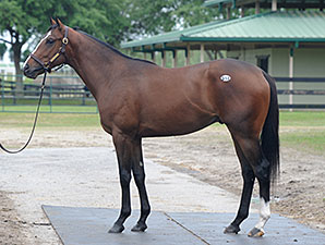 Tapit Colt Leads Robust OBS Second Session