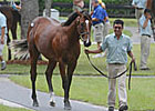 Photos of OBS Sale Yearlings Available
