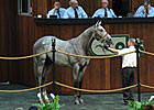 Average for OBS Select Yearlings Up 26%