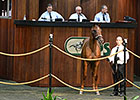 Stable Second Session at OBS August Sale