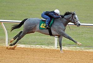 OBS Catalog Has 172 Horses
