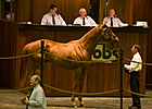 OBS Winter Mixed Sale Has 522 Horses