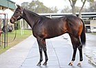 Montbrook Colt Brings $470,000 at OBS 