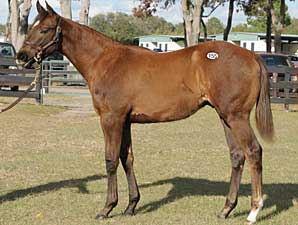 Average Drops 63% at OBS Mixed Sale