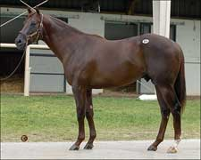 Distorted Humor Colt Paces June Sale Finale