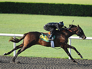 Macho Uno Filly Blazes at OBS June Preview