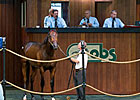 Conquest Stables sets auction record of $525,000 for Pioneerof the Nile colt June 19.