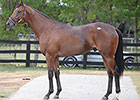 Into Mischief Colt Ties Record at OBS Day Two