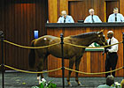 OBS March Sale Sets Records