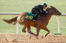 Menifee Filly Leads Ocala 2-Year-Old Preview Session