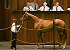 More Than Ready Filly Sells for $525,000