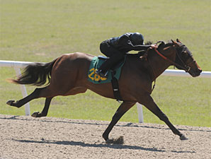 Dixie Union, Flatter 2YOS Set Pace at OBS