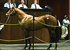 Flatter Colt Goes for $925,000 at OBS