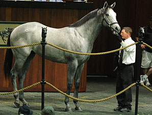 Mizzen Mast Colt Commands $350,000 at OBS