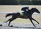 Three Fillies Breeze Under :10 at OBS March