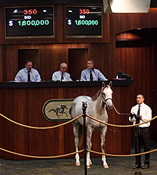 Two Colts Bring $1.6 Million Each at OBS