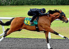 Discreet Cat Son Drills Fastest Eighth at OBS