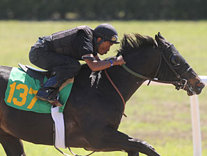Scat Daddy Colt Works Eighth in :9 4/5 at OBS