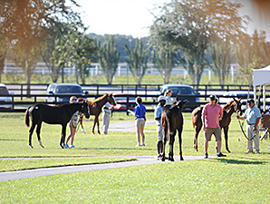 Expectations High for OBS Fall Mixed Sale