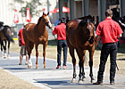 OBS, Consignors Ready for 2-Year-Old Sale