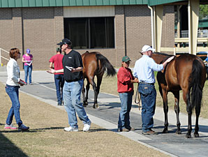 OBS March Sale Catalogs 345 Juveniles
