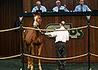 Numbers Mixed for OBS Winter Auction
