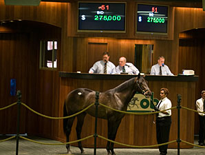War Front Colt Charges to Lead at OBS