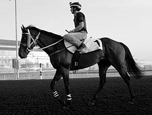 Ocean Park - Dubai March 25, 2013