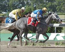 Distaff Owners Seek to Double Their Fun